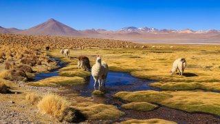 Les défis du tourisme au Chili
