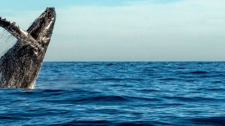 Les Baleines au Chili