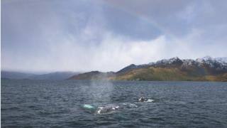 Le Parc Marin Francisco Coloane en Patagonie Chilienne