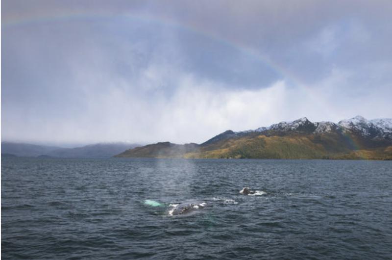 parc marin francisco coloane patagonie