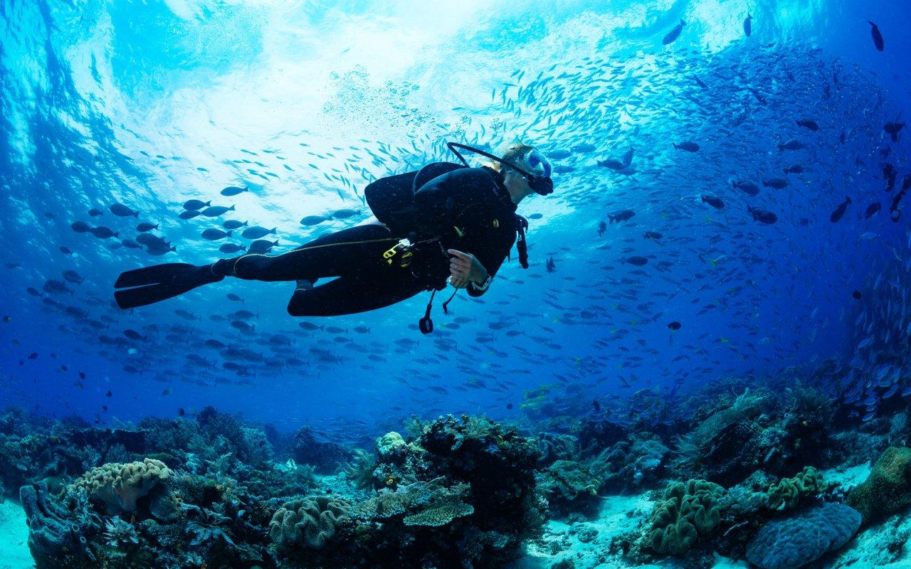 Plongee sur l'ile de paques