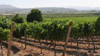 Vélo et vin dans la vallée de Casablanca au Chili