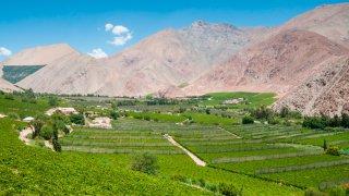 Vignobles de la vallée d'Elqui, Chili