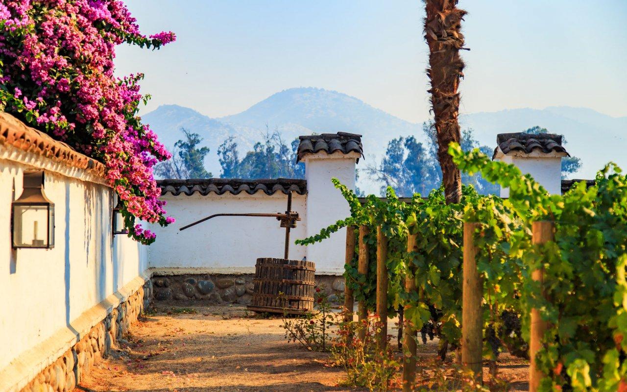 Winery, vallée de Maipo, la zone autour de Santiago du Chili